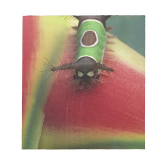 Costa Rica, Close-up of Caterpillar on Heliconia Memo Notepads