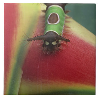 Costa Rica, Close-up of Caterpillar on Heliconia Tile