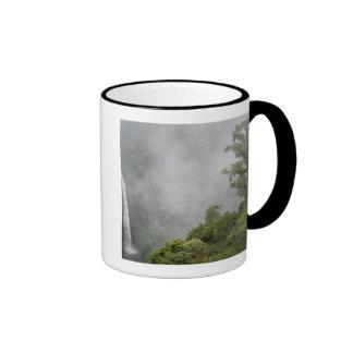 Costa Rica, cloud forest in mountains near La Coffee Mug