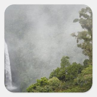 Costa Rica, cloud forest in mountains near La Square Sticker