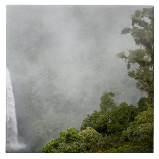 Costa Rica, cloud forest in mountains near La Tile