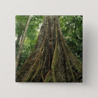 Costa Rica, Corcovado National Park, Buttressed Button