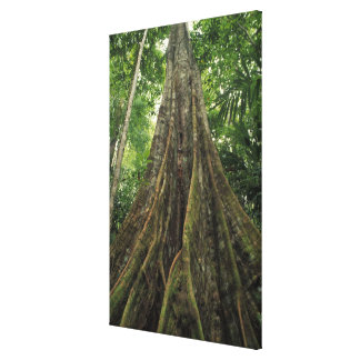 Costa Rica, Corcovado National Park, Buttressed Canvas Print
