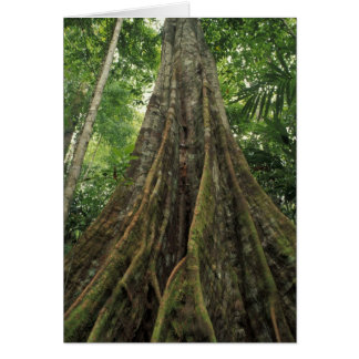 Costa Rica, Corcovado National Park, Buttressed Card