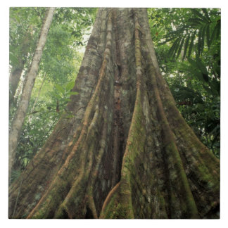 Costa Rica, Corcovado National Park, Buttressed Ceramic Tile