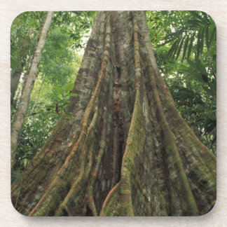 Costa Rica, Corcovado National Park, Buttressed Drink Coaster