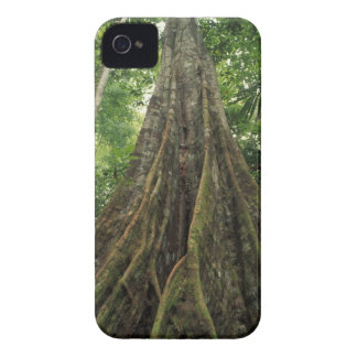Costa Rica, Corcovado National Park, Buttressed iPhone 4 Cover