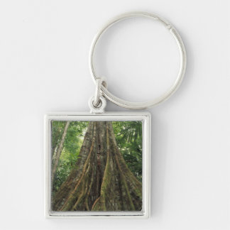Costa Rica, Corcovado National Park, Buttressed Keychain