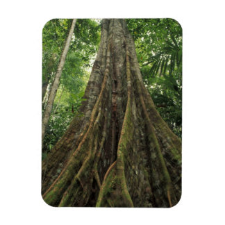 Costa Rica, Corcovado National Park, Buttressed Magnet