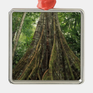 Costa Rica, Corcovado National Park, Buttressed Metal Ornament