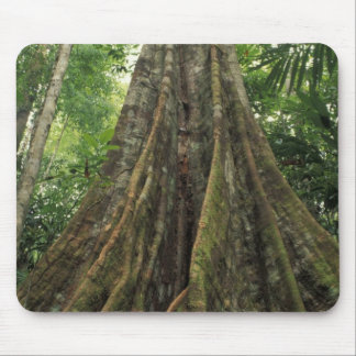 Costa Rica, Corcovado National Park, Buttressed Mouse Pad