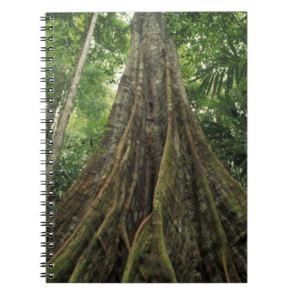 Costa Rica, Corcovado National Park, Buttressed Notebook