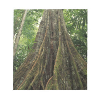 Costa Rica, Corcovado National Park, Buttressed Notepad