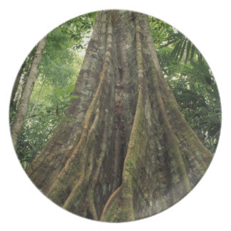 Costa Rica, Corcovado National Park, Buttressed Party Plates