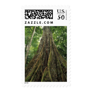 Costa Rica, Corcovado National Park, Buttressed Postage
