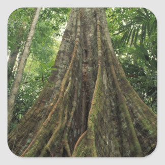 Costa Rica, Corcovado National Park, Buttressed Square Sticker