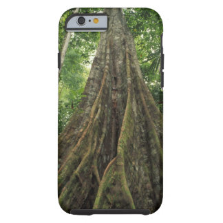 Costa Rica, Corcovado National Park, Buttressed Tough iPhone 6 Case