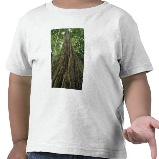 Costa Rica, Corcovado National Park, Buttressed T Shirt