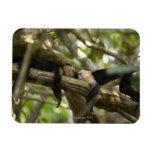 Costa Rica, dos monos que descansan sobre el árbol Imanes Rectangulares