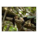Costa Rica, dos monos que descansan sobre el árbol Tarjetas