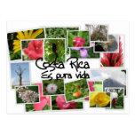 Costa Rica es Pura Vida! Postcard