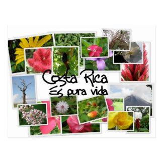 ¡Costa Rica es Pura Vida! Postal