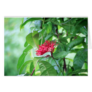 Costa Rica Floral Collection Card