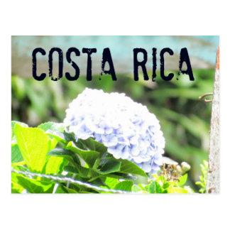 Costa Rica Flowers Postcard