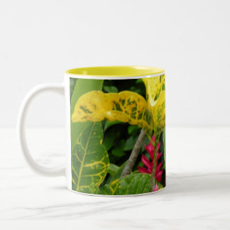 costa rica ginger mugs