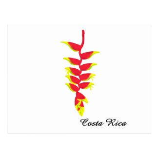 Costa Rica Heliconia Postcard