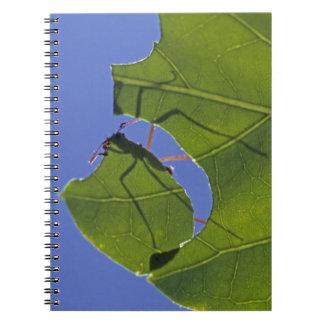 Costa Rica hormigas del cortador de la hoja ceph Libreta Espiral