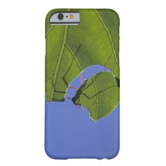Costa Rica, hormigas del cortador de la hoja, Funda Barely There iPhone 6