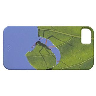 Costa Rica, hormigas del cortador de la hoja, Funda Para iPhone SE/5/5s