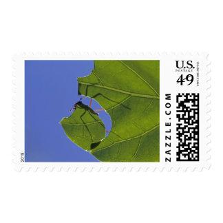 Costa Rica, hormigas del cortador de la hoja, Timbres Postales