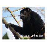 Costa Rica Howler Monkey Postcard