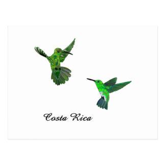 Costa Rica Hummingbirds Postcard
