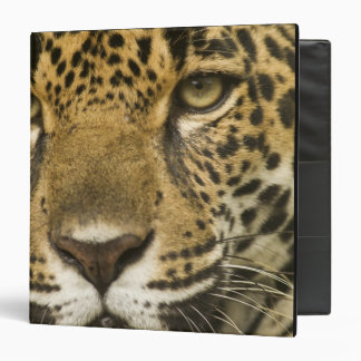 Costa Rica. Jaguar Panthera onca) portrait 3 Ring Binder