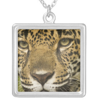 Costa Rica. Jaguar Panthera onca) portrait Silver Plated Necklace