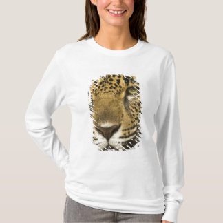 Costa Rica. Jaguar Panthera onca) portrait T-Shirt