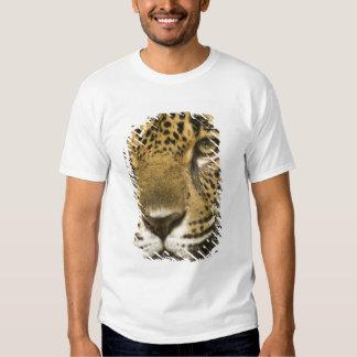 Costa Rica. Jaguar Panthera onca) portrait T-Shirt