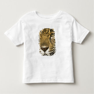 Costa Rica. Jaguar Panthera onca) portrait Toddler T-shirt
