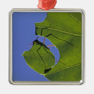 Costa Rica, Leaf cutter ants, Atta cephalotes Metal Ornament