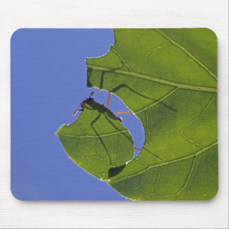 Costa Rica, Leaf cutter ants, Atta cephalotes Mousepads