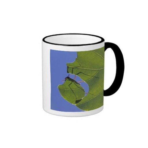 Costa Rica, Leaf cutter ants, Atta cephalotes Ringer Coffee Mug