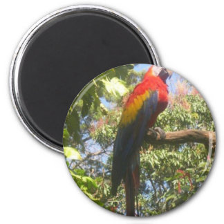 Costa Rica Macaw 2 Inch Round Magnet