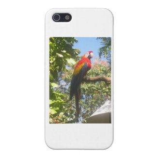 Costa Rica Macaw Cover For iPhone 5