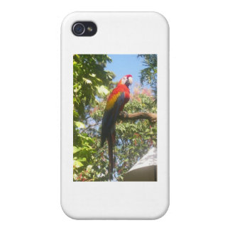 Costa Rica Macaw Covers For iPhone 4