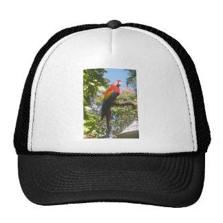 Costa Rica Macaw Trucker Hat