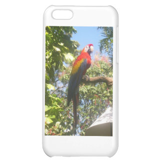 Costa Rica Macaw iPhone 5C Covers
