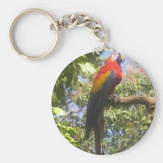Costa Rica Macaw Keychain